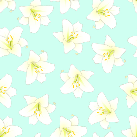 Lilium candidum, the Madonna lily or White Lily on Green Mint Background. Vector Illustration.