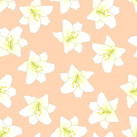 Lilium candidum, the Madonna lily or White Lily on Orange Peach Background. Vector Illustration.