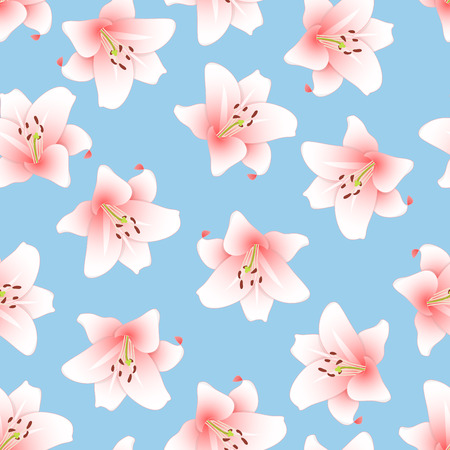 Lilium candidum, the Madonna lily or Pink Lily on Light Blue Background. Vector Illustration.