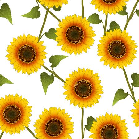 Orange Yellow Sunflower on White Background. Vector Illustration.