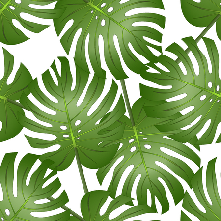 Philodendron Monstera Leaf Seamless isolated on White Background. Vector Illustration.