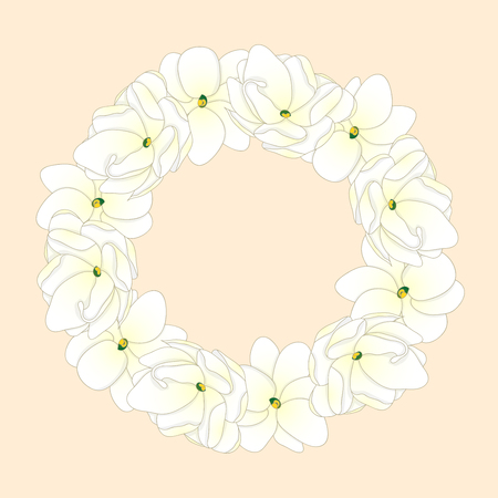 Jasminum sambac - Arabian Jasmine Wreath. Vector Illustration.