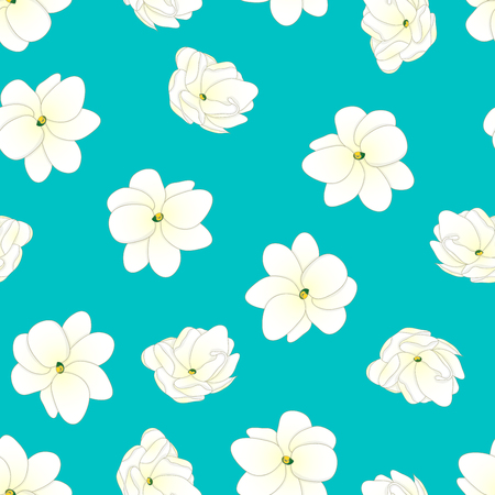 Jasminum sambac - Arabian Jasmine on Blue Teal Background. Vector Illustration. Illustration