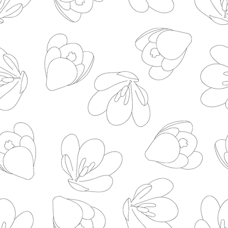 Contour de fleur de crocus blanc sur fond blanc. Illustration vectorielle.
