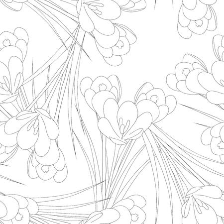 White Crocus Flower Outline on White Background. Vector Illustration.