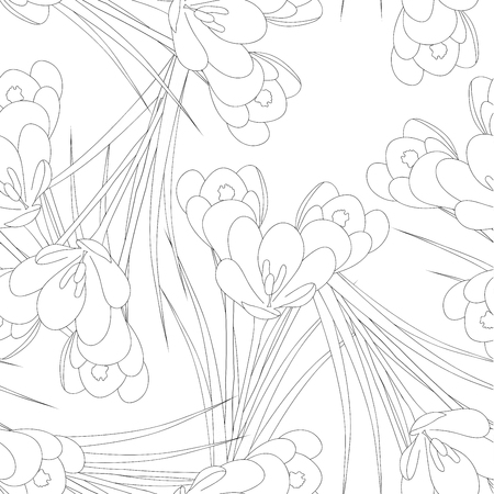 White Crocus Flower Outline on White Background. Vector Illustration.