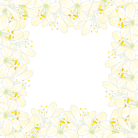 Snow White Agapanthus Border. Vector Illustration.