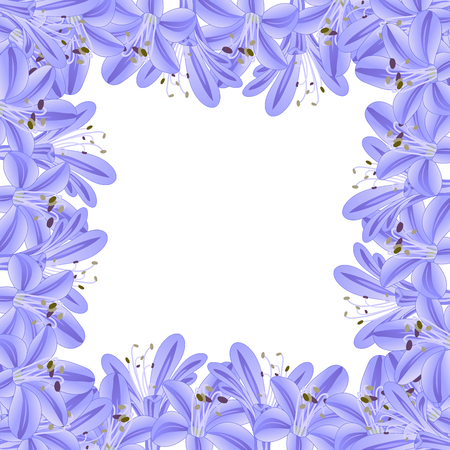 Blue Purple Agapanthus Border. Vector Illustration.