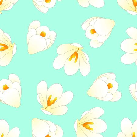 White Crocus Flower on Green Mint Background. Vector Illustration.