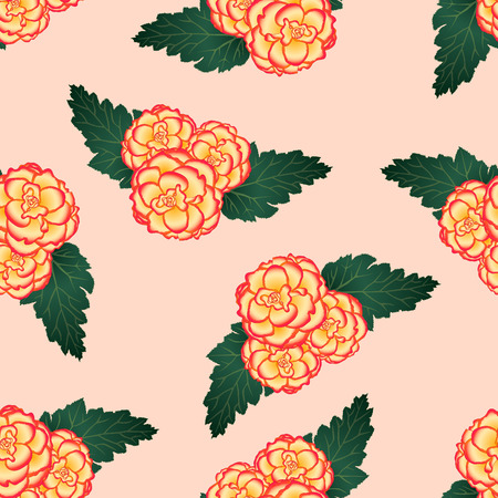 Begonia Flower, Picotee Sunburst on Light Pink Background. Vector Illustration. Illustration