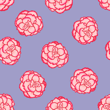 Pink Begonia Flower, Picotee First Love on Light Purple Background. Vector Illustration.