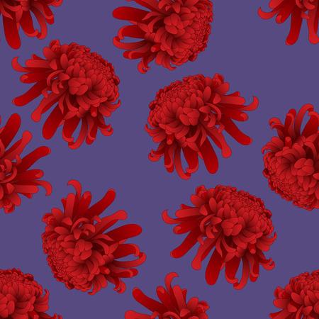 Red Chrysanthemum, Kiku Japanese Flower on Purple Background. Vector Illustration.