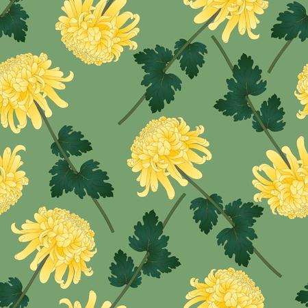 Yellow Chrysanthemum, Kiku Japanese Flower on Green Olive Background. Vector Illustration. Ilustração Vetorial