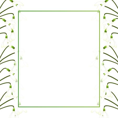 White Snowdrop Flower Banner Card Border. Vector Illustration. Ilustrace