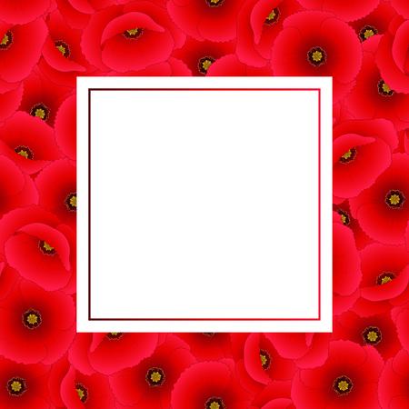 Papaver rhoeas Banner Card or common poppy,corn poppy,corn rose,field poppy,Flanders poppy or red poppy. Vector Illustration.