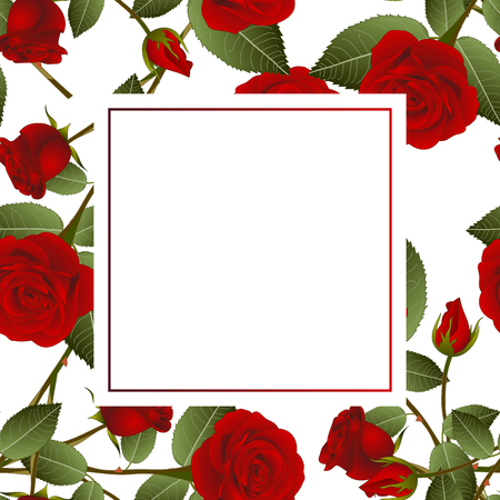 Beautiful Red Rose - Rosa Banner Card. Valentine Day. Vector Illustration.