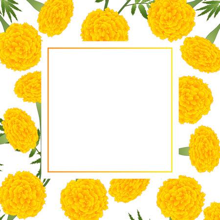 Yellow Marigold on White Banner Card. Vector Illustration.