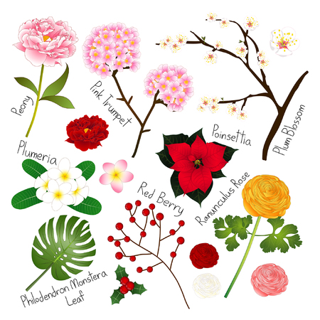 Flora Vector Collection. Botanical Illustration. isolated on White Background.