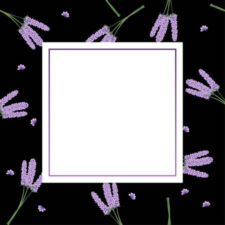 Lavender Flower Banner on Black Background. Vector Illustration. Illusztráció