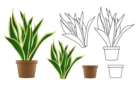 Snake Plant in Flowerpot isolated on White Background. Vector Illustration.