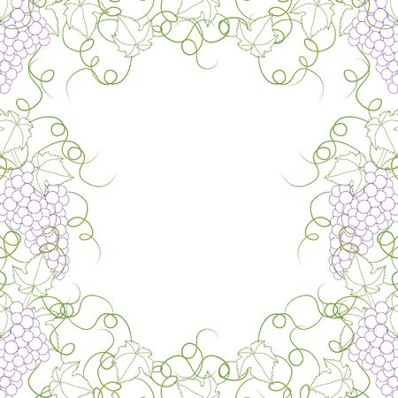 Colorful Line Grape Frame Vine on White Background. Vector Illustration.