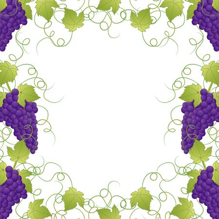 Purple Grape Frame Vine on White Background. Vector Illustration.