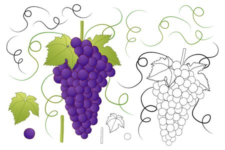 Red Purple Grape and Outline isolated on White Background. Vector Illusttration.