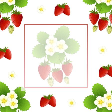 Red Strawberry and Flower Banner on White Background. Vector Illustration.
