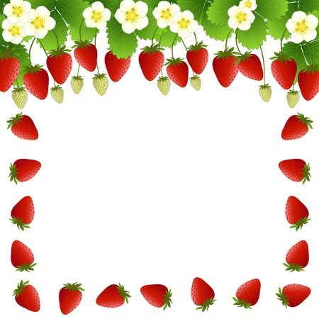 Red Strawberry and Flower Frame on White Background. Vector Illustration.