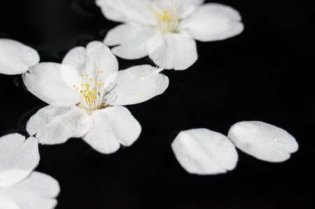Petals of cherry blossoms Imagens