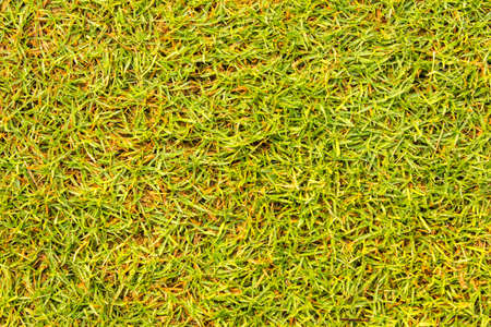 courses: Golf Courses green lawn Stock Photo