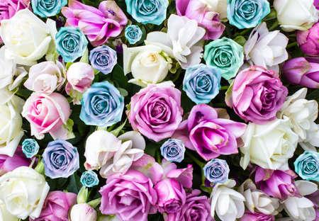 beautiful flowers roses. Stock Photo