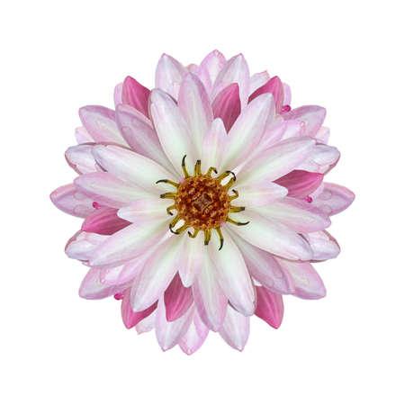 Beautiful lotus(Single lotus flower isolated on white background).