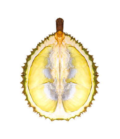 durian species  Monthong Thailand isolated on white background.