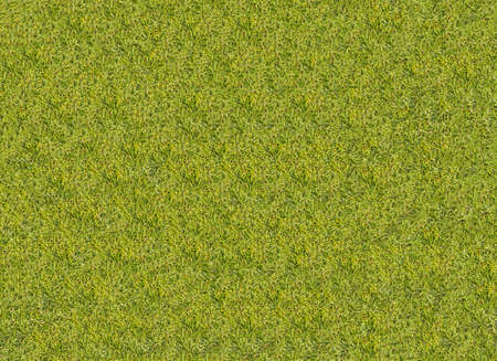 grass texture grass Golf Course for design pattern and background.