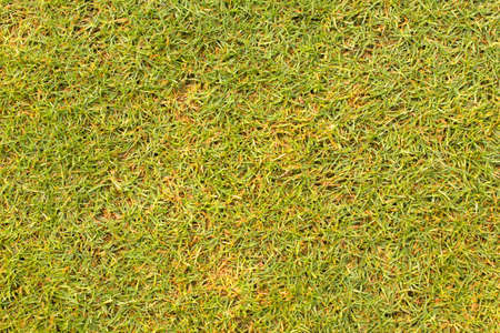 texture grass Golf Course for design pattern and background.