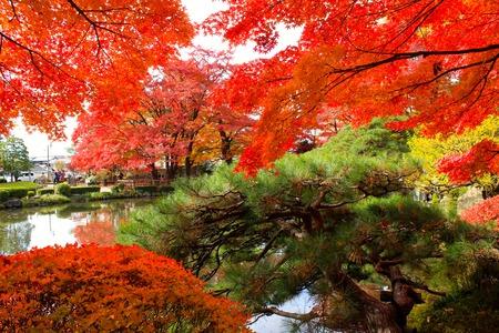 momiji: Momiji Park (Autumn Leaves)