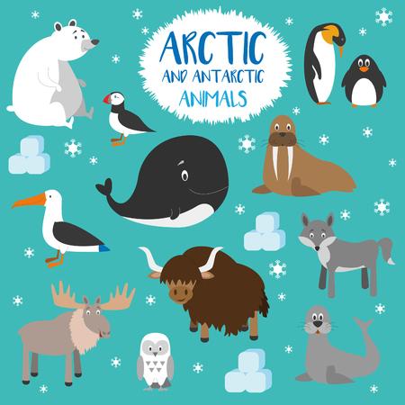 ベクトルは、北極と南極の動物を設定します。
