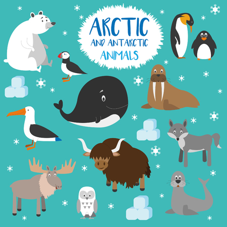 funny ox: Vector set Arctic and Antarctic animals.