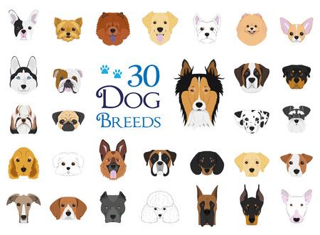 Razas de perros Vector Colección: Conjunto de 30 razas de perros diferentes en estilo de dibujos animados.