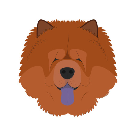 chow: Chow Chow dog isolated on white background vector illustration Illustration