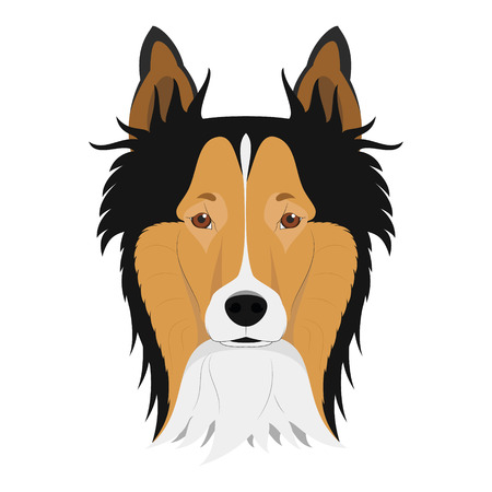 border collie: Collie Rough dog isolated on white background vector illustration Illustration