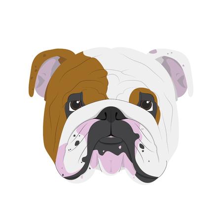Englisch Bulldog Hund auf weißem Hintergrund Vektor-Illustration isoliert