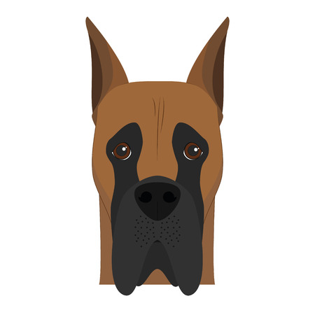 Great Dane dog isolated on white background vector illustration Illustration
