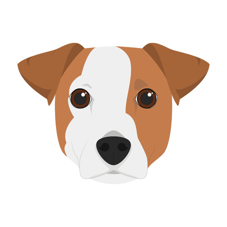 russell: Jack Russell dog isolated on white background vector illustration