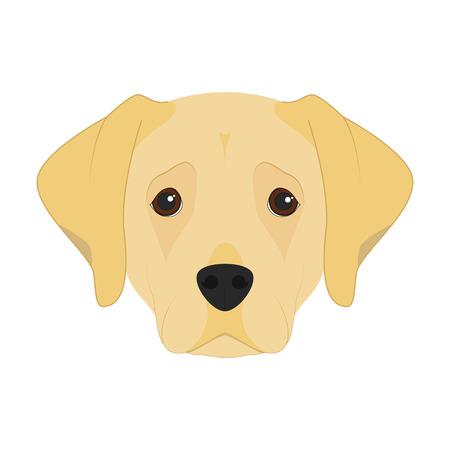 labrador: Labrador Retriever dog isolated on white background vector illustration Illustration