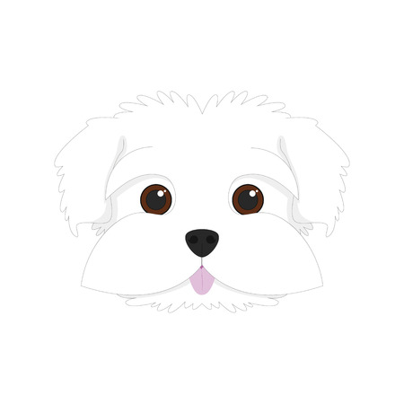 maltese dog: Maltese dog isolated on white background vector illustration Illustration