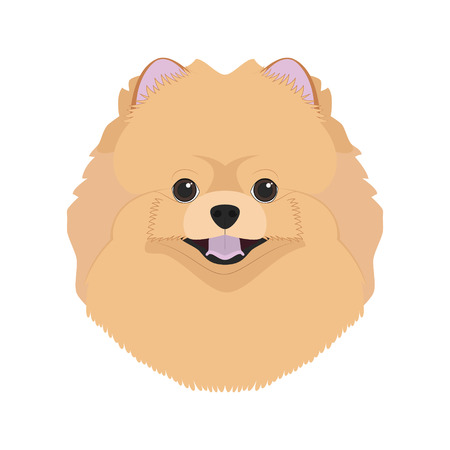 Pomerania perro aislado en el fondo blanco ilustración vectorial Ilustración de vector