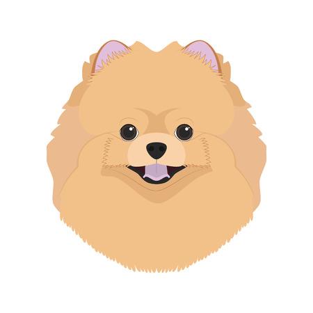 Pomeranian dog isolated on white background vector illustration