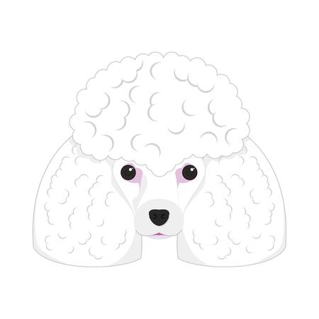 Poodle dog isolated on white background vector illustration
